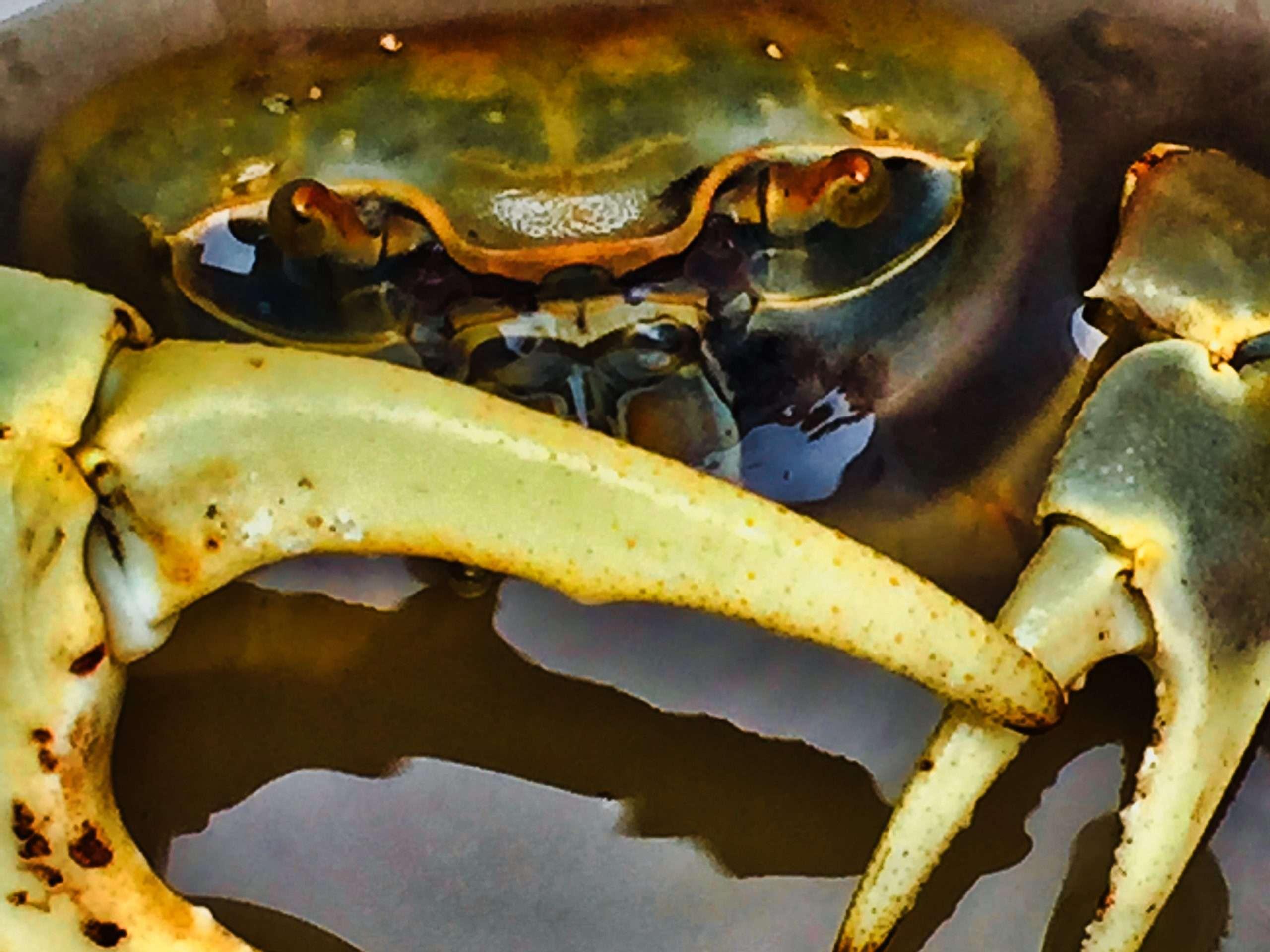 camera-phone-crab-IMG_0332-scaled.