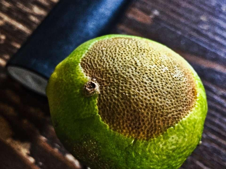 lemon-iphone-detail-camera-960